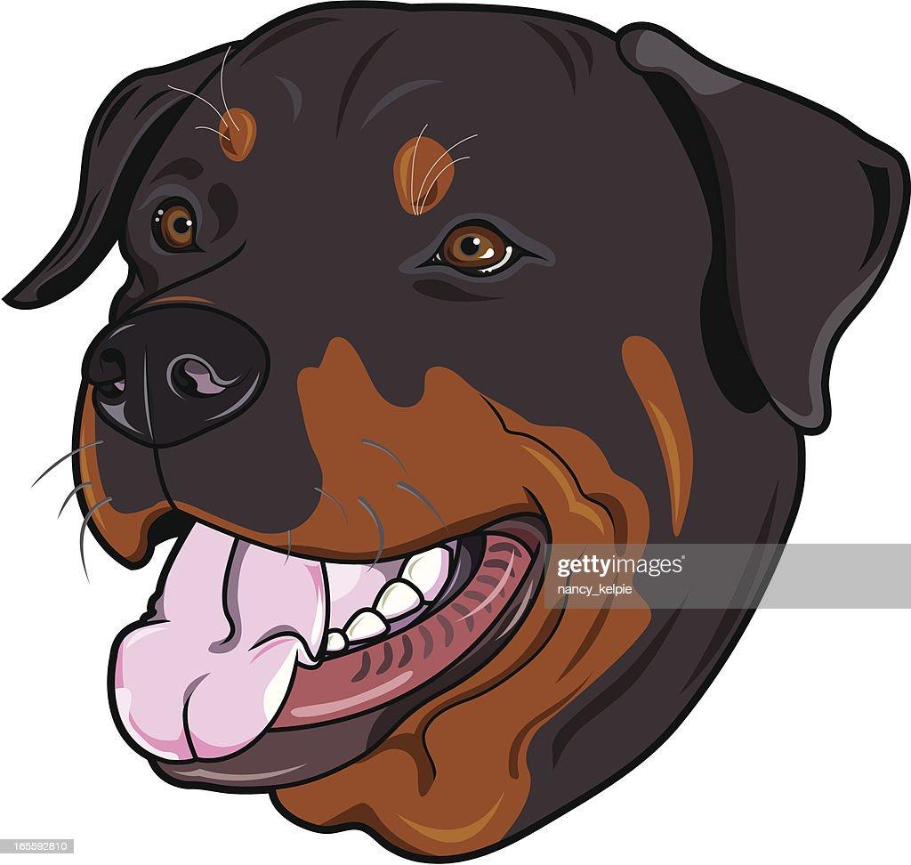 Rottweiler (dog)