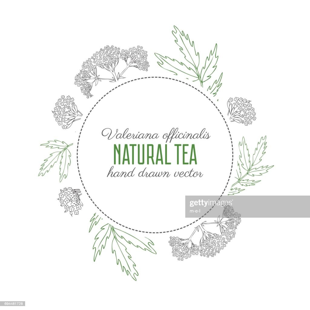 Round frame, Valeriana officinalis hand drawn vector outline illustration isolated on white background, line art ink sketch for design package cosmetic, organic medicine, greeting card, herbal tea