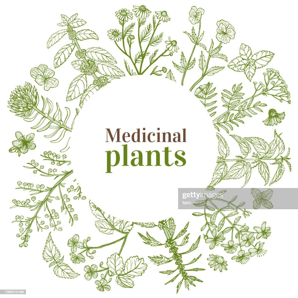 Round Template with Medicinal Plants in Hand-Drawn Style