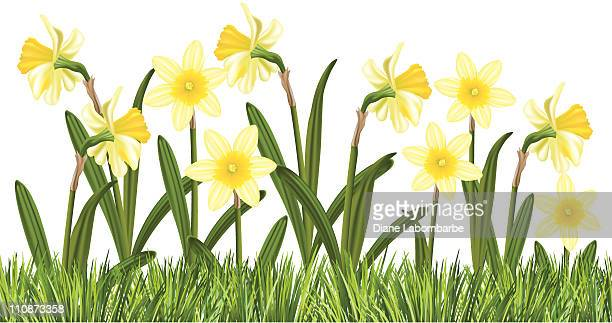row of daffodils in the grass - daffodil stock illustrations, clip art, cartoons, & icons