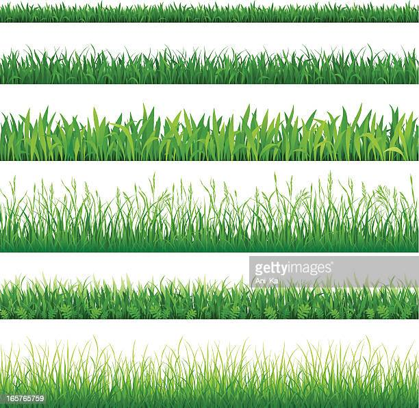 Rows of different types of green grass