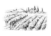 Rows of vineyard grape plants and castle