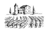 Rows of vineyard grape plants and house