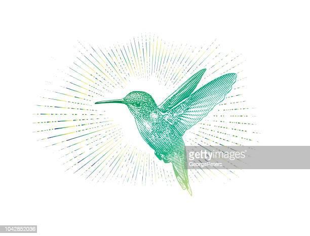 Ruby Throated Hummingbird flygande