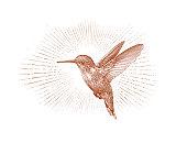 Ruby Throated Hummingbird flying