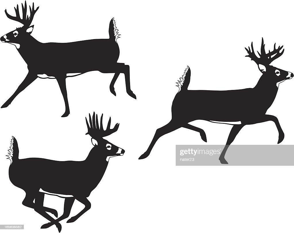 running Whitetail Bucks : stock vector