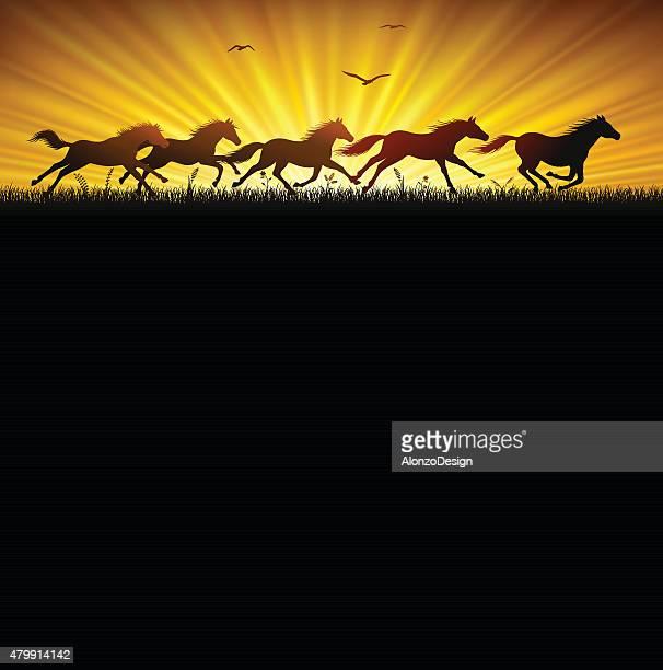 Running Wild Horses