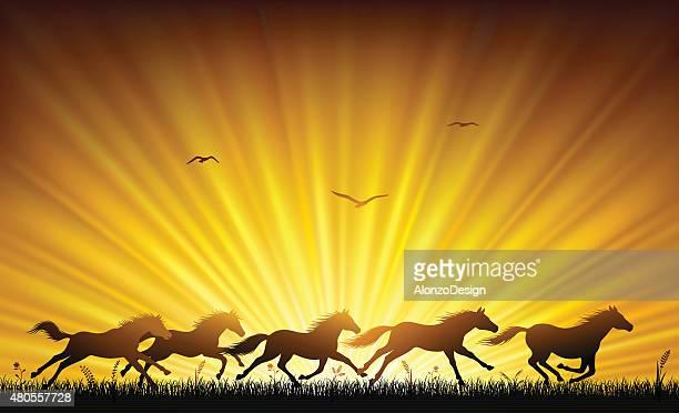 running wild horses - mustang wild horse stock illustrations, clip art, cartoons, & icons