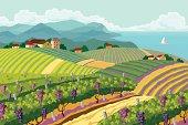 Rural landscape with vineyard.