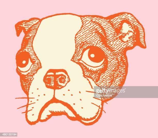 sad boston terrier - boston terrier stock illustrations