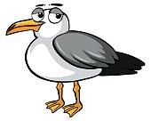 Sad pigeon on white background