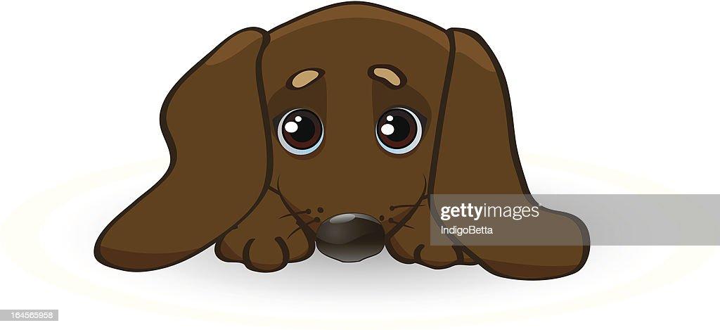 Sad puppy dachshund.