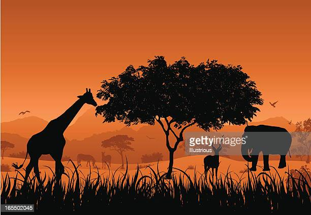 safari scene - kudu stock illustrations, clip art, cartoons, & icons