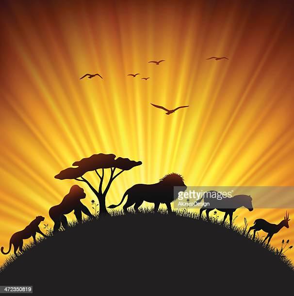 safari sunset - night safari stock illustrations