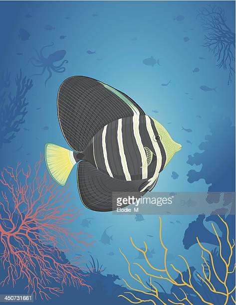 sailfin fish / chirurgien voilé - acanthuridae stock illustrations, clip art, cartoons, & icons