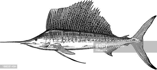 sailfish drawing - sailfish stock illustrations