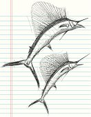 Sailfish sketches