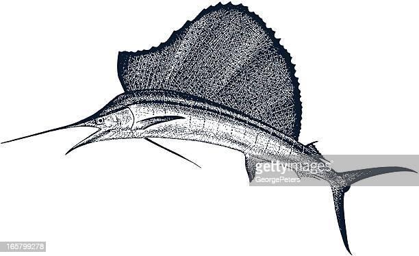sailfish - sailfish stock illustrations
