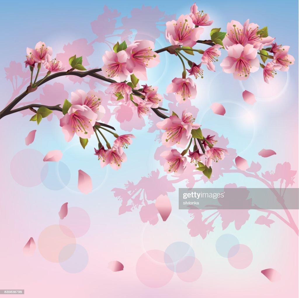 Sakura blossom - Japanese cherry tree background