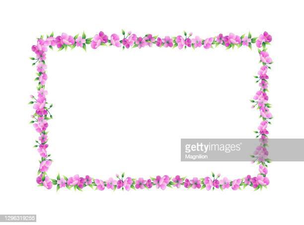 sakura blossom rectangular vector - femininity stock illustrations