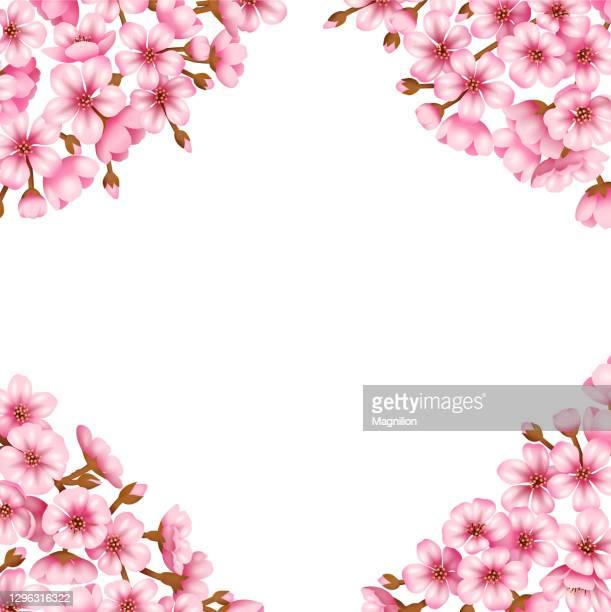illustrations, cliparts, dessins animés et icônes de fond de vecteur de fleur de sakura - cerisier japonais