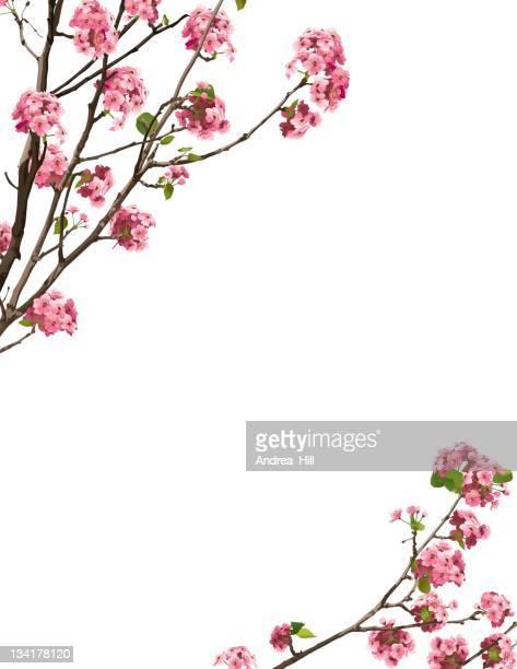 sakura border - cherry blossom stock illustrations, clip art, cartoons, & icons