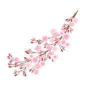 Sakura branch with pink flowers
