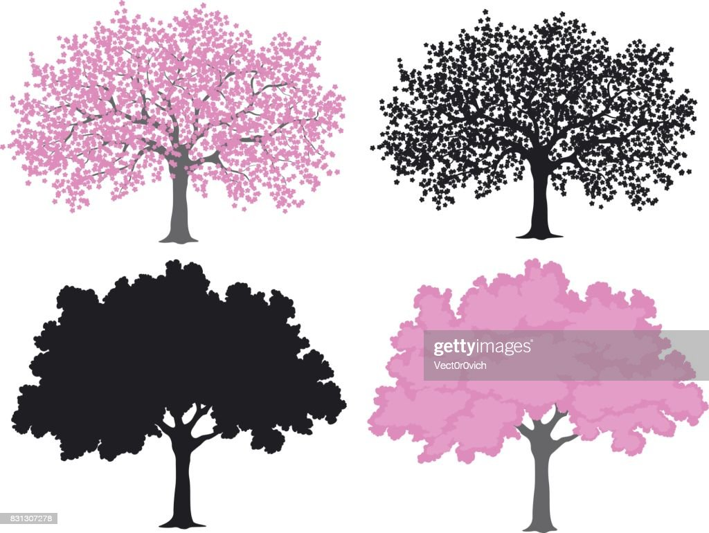 Sakura, cherry blossom tree in color and silhouettes