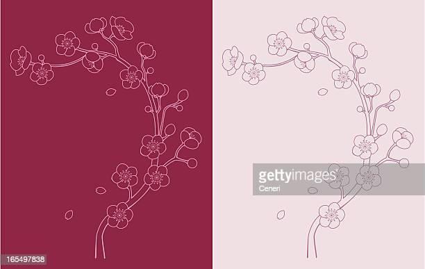 illustrations, cliparts, dessins animés et icônes de sakura et fleur de cerisier vine - fleur de cerisier