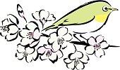 Sakura cherry blossoms and a white-eye