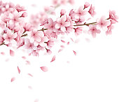 sakura cherry spring blossoms composition realistic