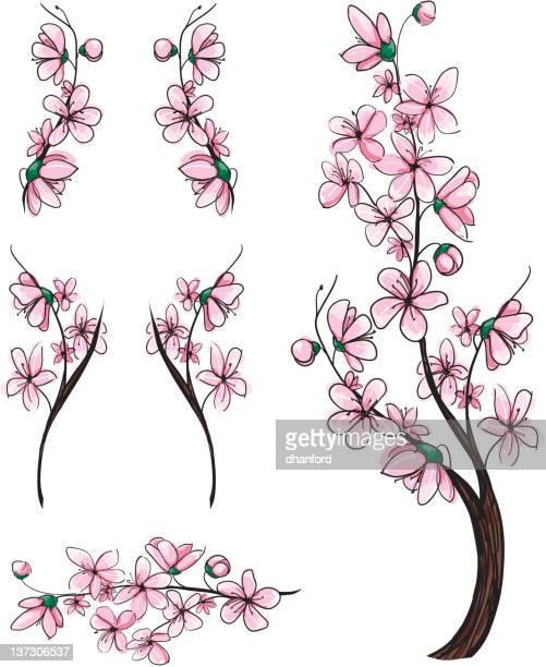 ilustraciones, imágenes clip art, dibujos animados e iconos de stock de cherry tree sakura ramas - cherry tree