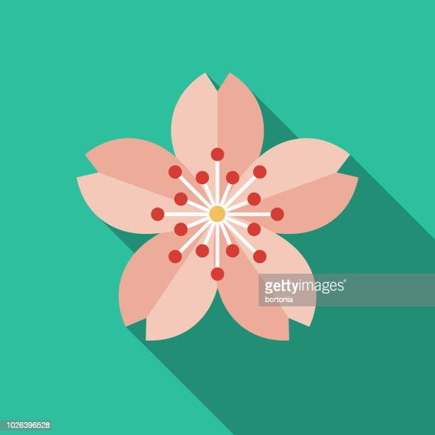 sakura flat design japan icon - flower stock illustrations