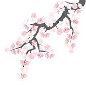 Sakura flowering branch, vector illustration