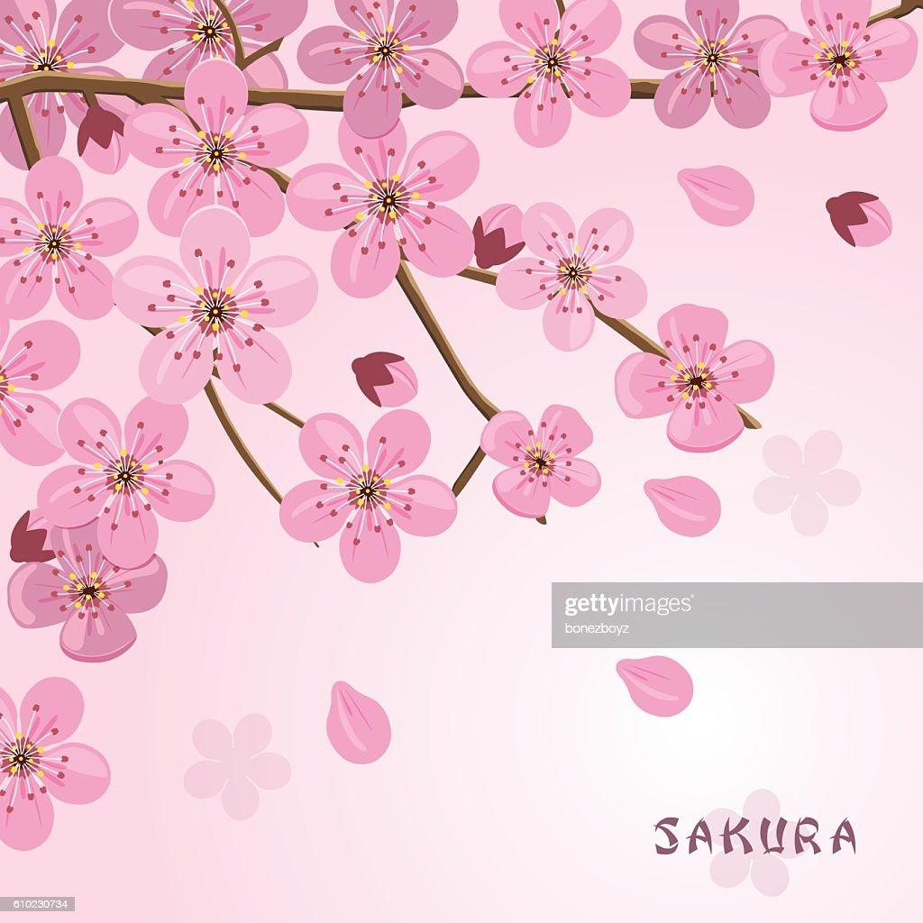 Sakura Flowers Background Japanese Cherry Tree High Res Vector