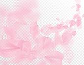 Sakura petal flying vector background. Pink flower petals wave illustration isolated on transparent white. 3D romantic valentines day spring tender light backdrop. Overlay tenderness romance design