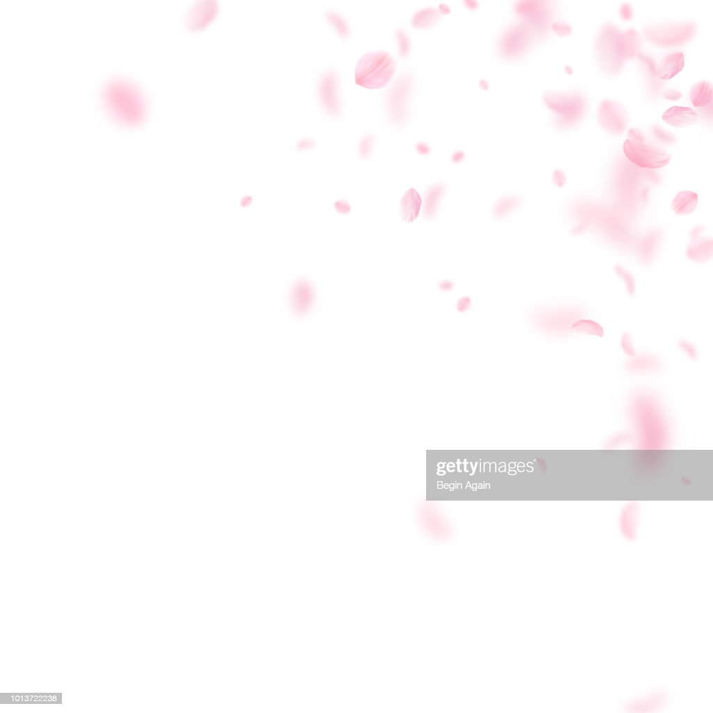 Sakura petals falling down. Romantic pink flowers corner. Flying petals on white square background.