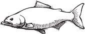 Salmon Sketch
