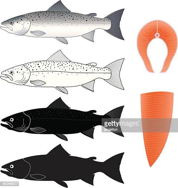 illustrations, cliparts, dessins animés et icônes de saumon - saumon