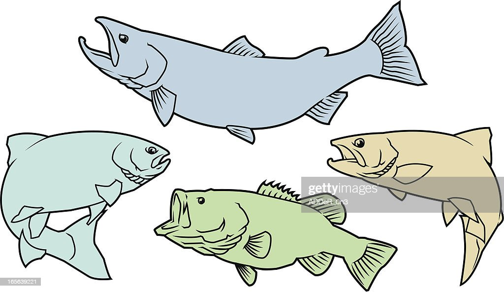 Salmon,Trout, and Bass