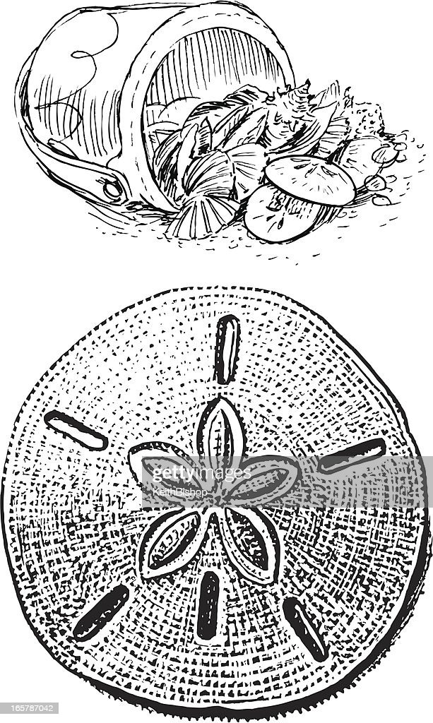 Sand Dollar and Sea Shell Bucket