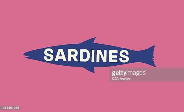 Sardinen Fisch