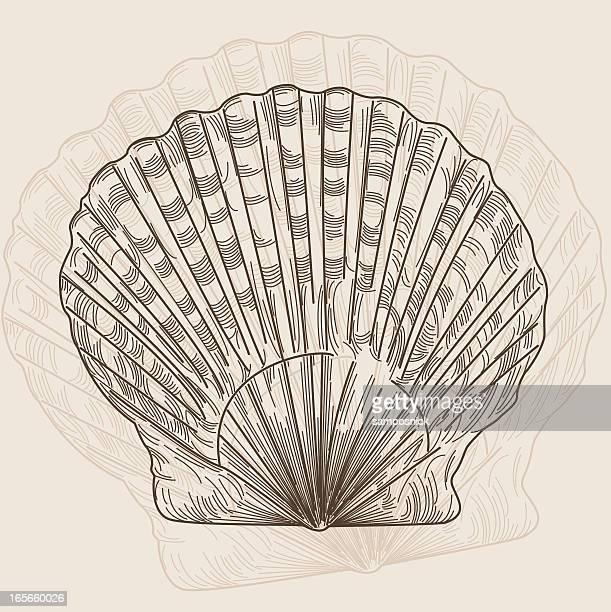 スカラップの貝殻