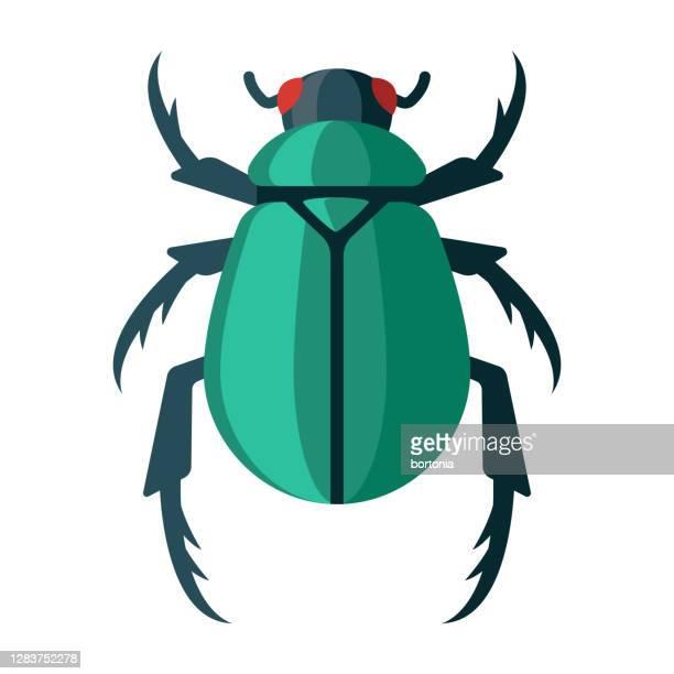 illustrazioni stock, clip art, cartoni animati e icone di tendenza di icona scarabeo sullo sfondo trasparente - coleottero
