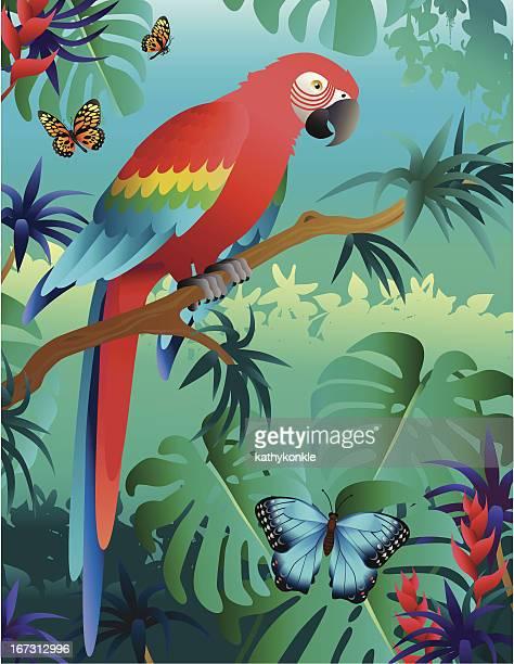 Ara rouge dans la forêt tropicale