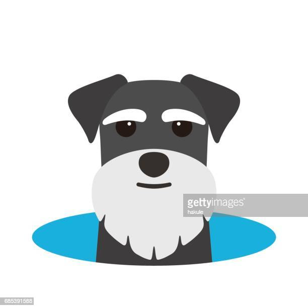 Schnauzer dog on the hole,watching, vector illustration