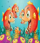 School of piranha under the sea