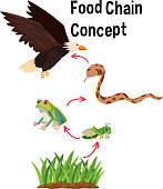 Science Food Chain Concept