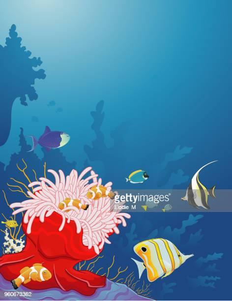 sea anemone / anémone de mer - acanthuridae stock illustrations, clip art, cartoons, & icons