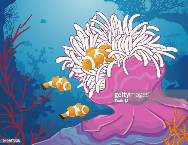 Sea anemone/Anémone de mer